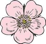 flower, wildrose clipart