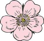 flower, wildrose clipart