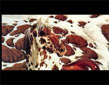 Are you familiar with Bev Doolittle's nature/horse artistry?  Check it out http://www.bing.com/images/search?q=bev+doolittle+prints&qs=IM&form=QBIR&pq=bev+doolittle&sc=8-13&sp=2&sk=IM1